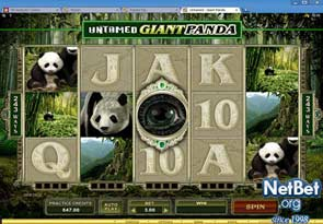 Untamed - Giant Panda Slot